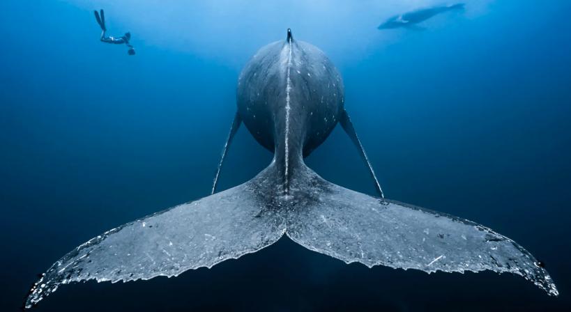 Dimensión oculta: las mejores fotos submarinas de 2018