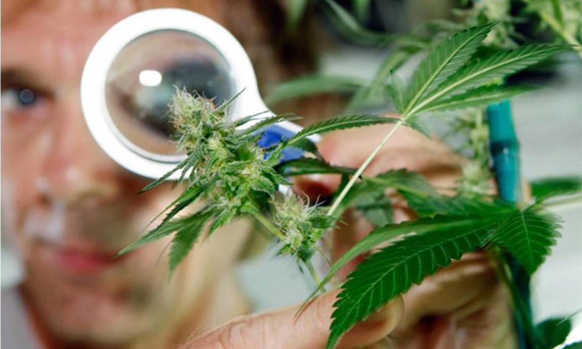 San Juan adhiere a la ley de cannabis medicinal y garantizará el reparto