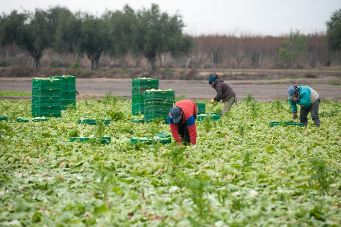Digitalizar al rubro agroalimentario
